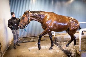 Vid vissa skador, till exempel en hovbensfraktur, är simning den enda träningsformen som en häst kan utföra.