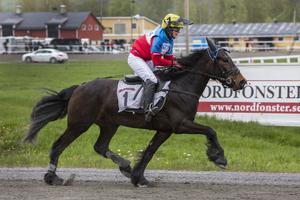 Övikshästen Lennart Viking tog sin första seger hemma på Solänget med rutinerade Susanne H Osterling i sadeln.