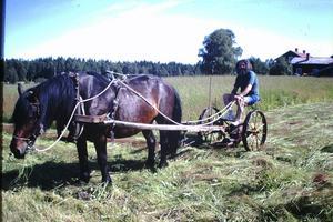 László Gönczi skötte jordbruket som i forna tider.
