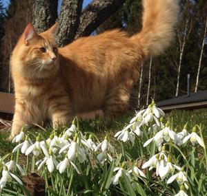 Gustav har inte varit så förtjust i snön och nu när våren är här njuter han för fullt.