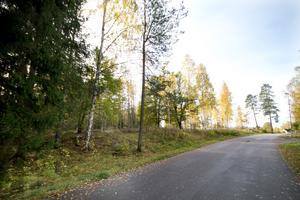 Här, på Kottmossvägens södra sida, vill företaget bygga bostäder.