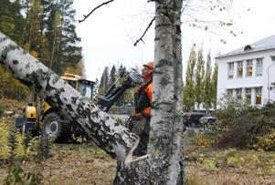 Stig Svedin arbetar med trädfällning för parkeringsplatsbygge vid Bergeforsens skola.