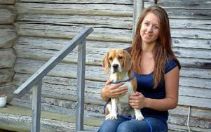 Madelene Bäck med beaglen Sydney – guldklimpen som vann en utställning senast och är internationell champion. Foto: Per Malmberg/DT