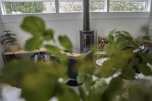 Även inne i huset går det att hitta en hel del växter.
