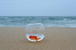 Ett hotell erbjuder en fisk som sällskap.