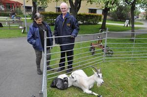 Arne Lundin som bor på Danielsgården uppskattade att få klappa getter. Han har tidigare jobbat som bonddräng. Bredvid hans fru, Ingrid Lundin.