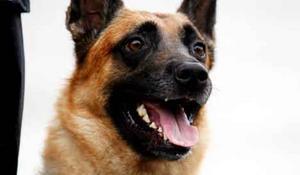 Polisen kommer att patrullera med hund i större utsträckning än tidigare. Foto: Anders Forngren