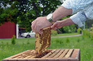 Åke Flood gillar att umgås med sina bin.