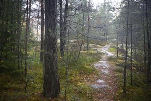 Det finns många upptrampade stigar i området med skog och berg mellan höghusen i Fornbacken/Fornhöjden, som skymtar mellan träden till vänster, och villorna i Östertälje, som ligger utanför bild nere till höger.
