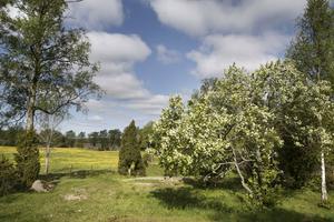 Vi behöver ta krafttag för att vända utvecklingen för ängs- och betesmarkerna, skriver Stina Bergström och Emma Nohrén.