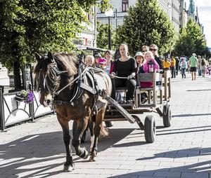 Färdas runt staden som man gjorde i slutet av 1800-talet, med häst och vagn.