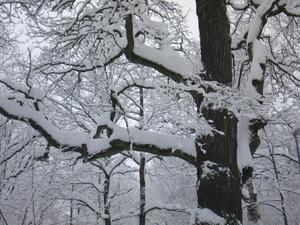 Säga vad man vill om vintern: kall, ruskig, rolig, kul, åsikterna kan gå isär, men den är alltid vacker!
