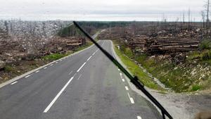 En skogsöken. Strax utanför Ängelsberg försvinner skogen plötslig och ersätts av vidsträckt en svartbränd hed.