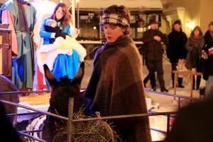 Levande julkrubban med åsnor från Vallby friluftsmuséum.