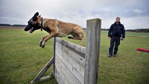 """""""Hundarna är fenomenala i polisarbetet. De spårar tjuvar, narkotika och hittar försvunna personer"""", säger Roger Björne. Här tränar han sin hund Bita."""