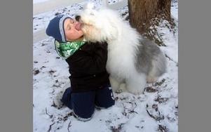 När Cruella vinner en utställning blir hon så glad att hon vill pussa på alla. Här demonstrerar hon på mattes son Liam.
