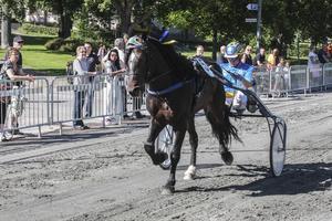 Järvsö Björn vann samtliga fyra lopp på Drottninggatan i Hudiksvall.