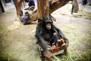 Tvååriga Selma leker med en låda i stället för att bekymra sig om återvinning.