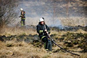 Brandmännen fick slita med brandslangarna för att kunna bekämpa gräsbranden i Kroksgård mellan Dvärsätt och Rödön.