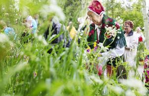 Fullt på blomsterängen. Margareta Florin plockar en stor bukett.