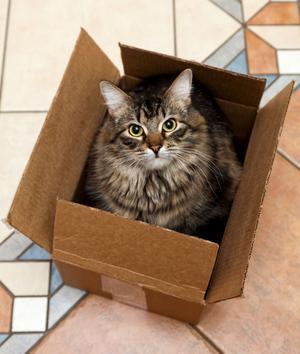 Den som vill skaffa katt har mycket att ta ställning till. Hur mycket man vill betala till exempel. Katter från katthem kostar omkring 1 000 kronor. Då är de ofta vaccinerade och id-märkta.