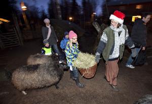Sonya Lundsten, sju år, ger Tomtemor en hjälpande hand med utfodringen.