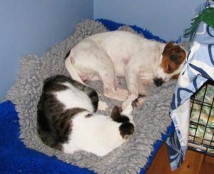 """""""Jag föredrar både hund och katt. Hunden heter Lord, katten lilla katten Mys-Märta"""".Foto: MargotEriksson, Optand."""