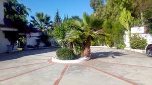 Rondell och parkering med palmer.