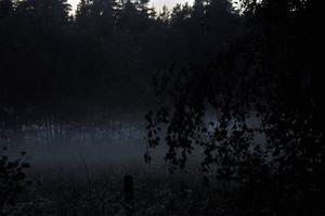En magisk  sommarnatt utanför mitt hus.