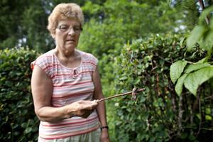 Hilkka Risberg har en favoritpinne som alltid står redo att användas om hon skulle stöta på några mördarsniglar i trädgården.