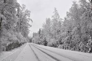 En kall Decemberdag när snön och frosten skapade denna bild.