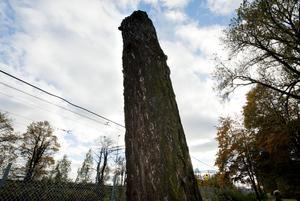 Närheten till järnvägen och en rotförsvagning var två av anledningarna till att detta lärkträd måste sågas ner förra vintern. Men nu får det nytt liv igen när det ska bli en trädstaty som berättar traktens historia.
