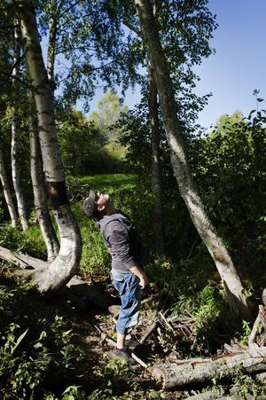 Ulf Solvander berättar att han påpekade för skolledare om de farliga träden för drygt två år sedan.