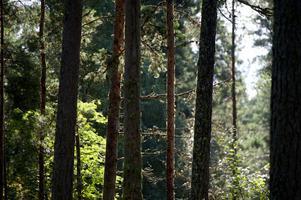 En skog med träd som har olika höjd och olika dimensioner utmärker hyggesfritt skogsbruk.