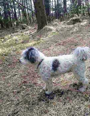 Linus fem år gammal dog efter hundattack på Frösön.