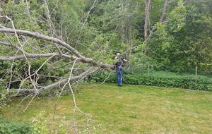 När du får oväntat besök. Trädet föll över tomten på Bjurhovda. Lyckligtvis fick ingen trädstammen i huvudet. Kommunen skickade arbetare för att såga trädstammen i bitar.