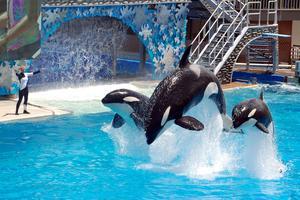 Många turister är tveksamma till delfinarier.