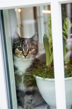 Kattungen Doris har fått namn efter makens mormor som gick bort förra sommaren.  Hon är nyfiken på allt.