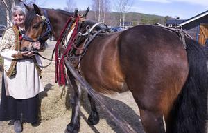 Cilla Westlund och forbondehästen Orrius skjutsade besökare på Kvarndagen.