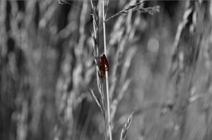 När jag var ute i Farmors trädgård så såg jag de här två insekterna bland växterna.
