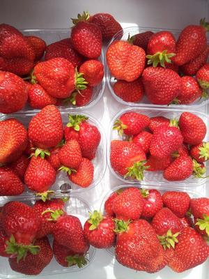 Härliga jordgubbar från Sollerön, solens ö i Siljan.
