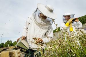 Politiker som bryr sig om djur är vanligt i EU-valrörelsen, men glöm inte bina.