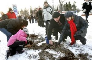 Kommunalrådet Per Johansson, s, och vägverkets vägdirektör Caroline Ottoson hjälptes åt att plantera lökar som ska skapa blomsterprakt i vår.