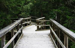Totalt 600 meter trätrottoarer finns i naturreservatet för att tillgängliggöra utsikten över Ljusnan.