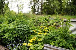 Både blommor och nyttoväxter frodas i Britt och Henning Åströms biokolsberikade jord.