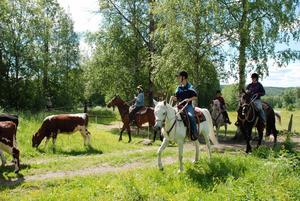 Kontroll. För en cowboy gäller att smidigt men bestämt fösa korna i rätt riktning.