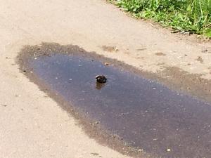 Såg den lilla fågeln bada efter att vi hade lämnat våran dotter på förskolan
