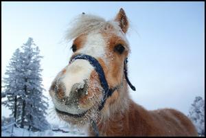 Väderbiten pålle!  Foto: Anette Mårtensson