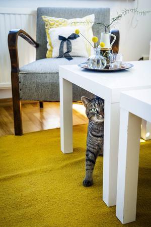 Katten Ture kom från ett katthem och var till en början väldigt skygg. Nu är han trygg med Jennie och han trivs i den ljusa lägenheten.