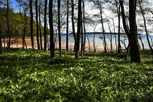 Ett misstänkt jaktbrott har skett i Skärgårdsstiftelsens naturreservat vid Riddersholm på Rådmansö.